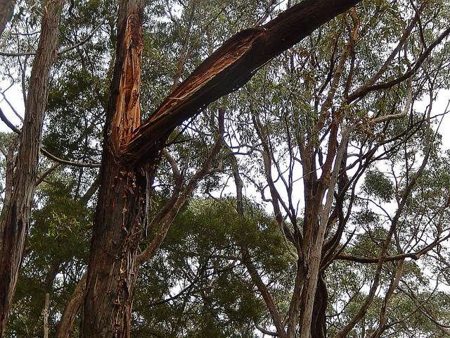 overhanging tree law
